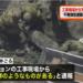 東京江東区の不発弾マンションの場所、周辺にもたくさん埋まってる都市伝説は本当だった?
